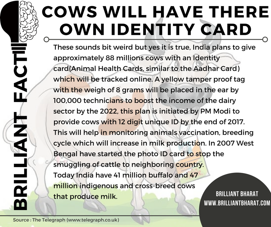 Cows with ID card in India